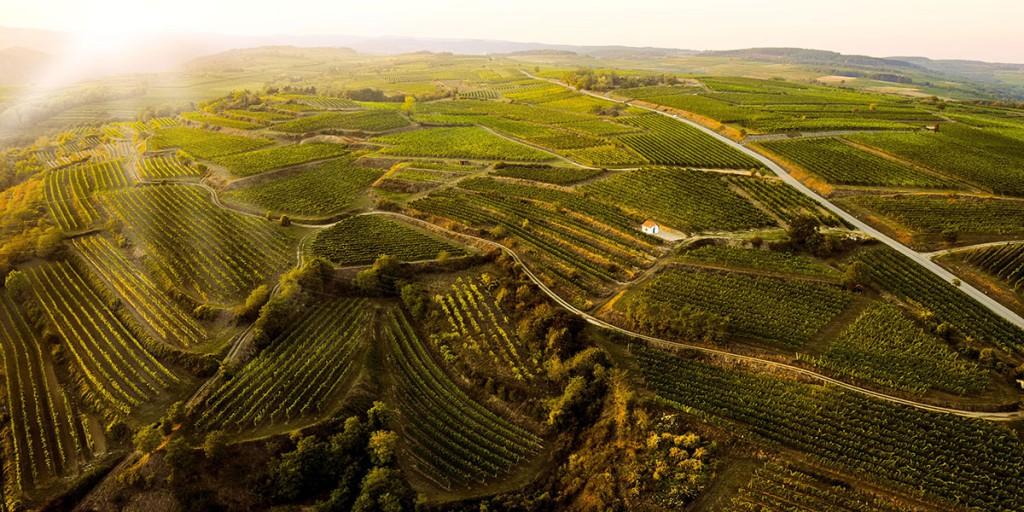 Producer wine